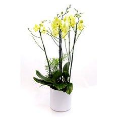 Light Green Orchids