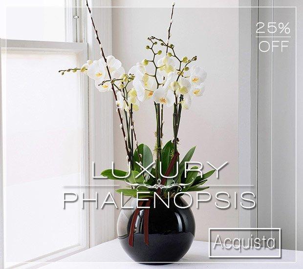 Luxury Phalenopsis